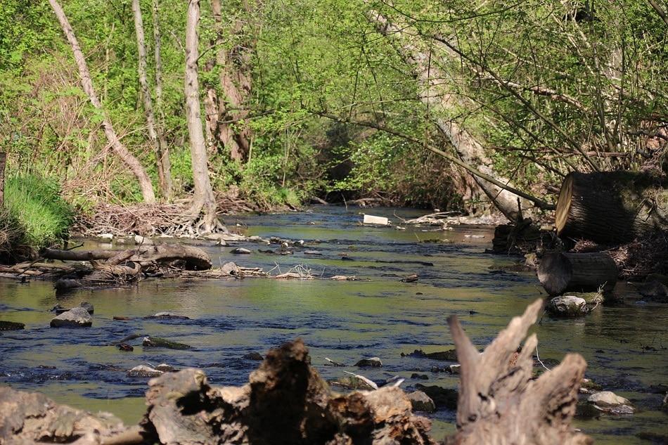 Dillon Lake River Creek Property